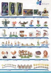 فروش مولاژ پزشکی و آموزشی