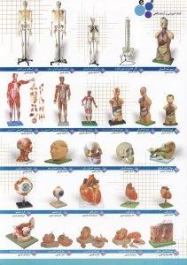 فروش مولاژ بدن انسان